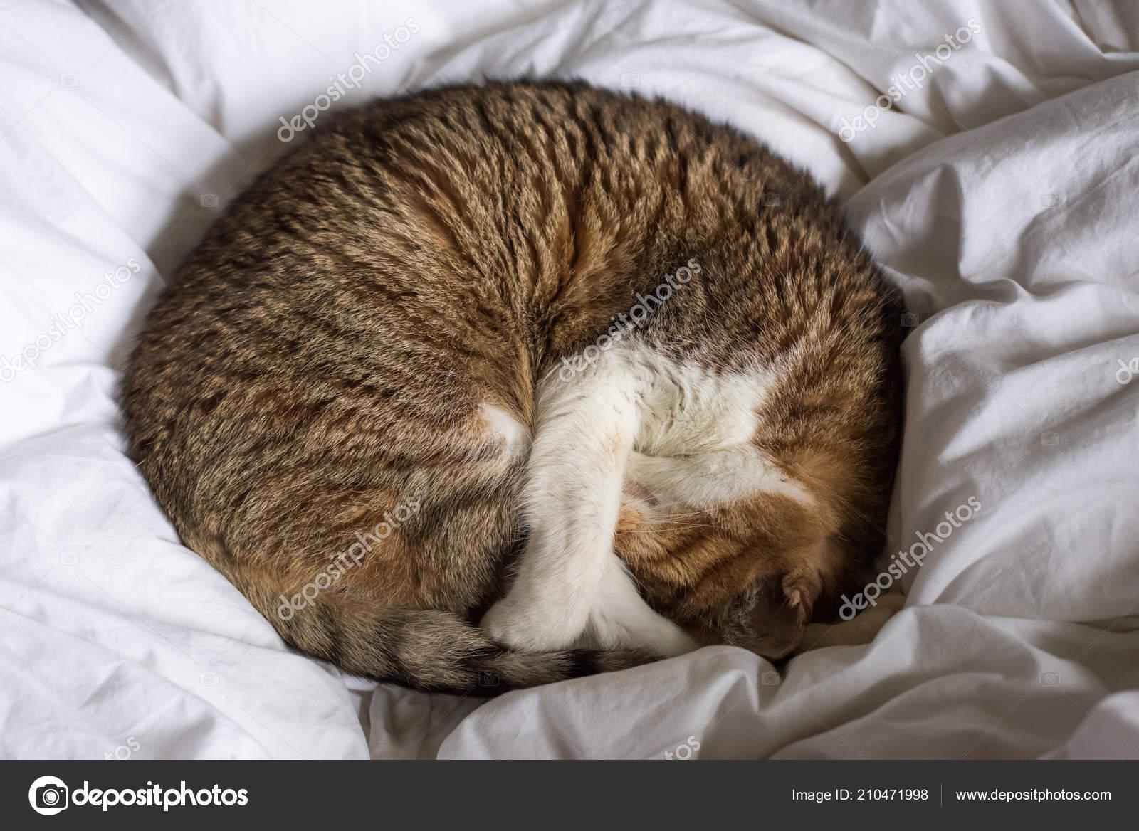 Roztomilé tlusté kočička fotky