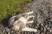 Fotografie little cat itch