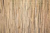 žlutá bambusová stěna pozadí