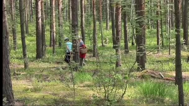 Nagymama és unokája ment az erdőbe, nyáron keresni gomba