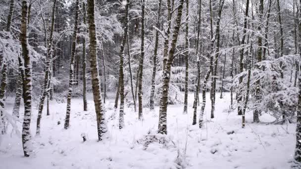 sněhové vločky na pozadí lesa