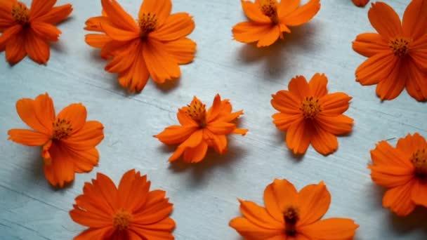 Orange cosmos flower on wooden background.