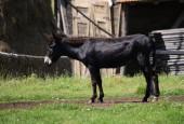 Photo donkey on the farm