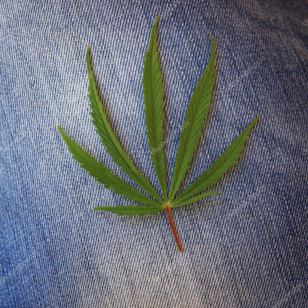 A Cannabis Sativa leaf on blue denim.