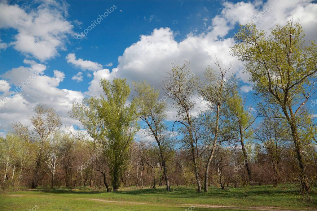 Natural landscape, trees, pasture against a blue sky with clouds
