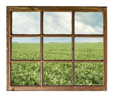 field of green soybean plants with storm clouds as seen from vintage sash cabin window