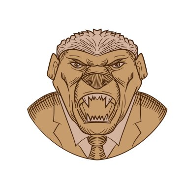 Drawing sketch style illustration head of an aggressive and angry honey badger wearing a coat and tie or business suit baring it's fangs on isolated white background.