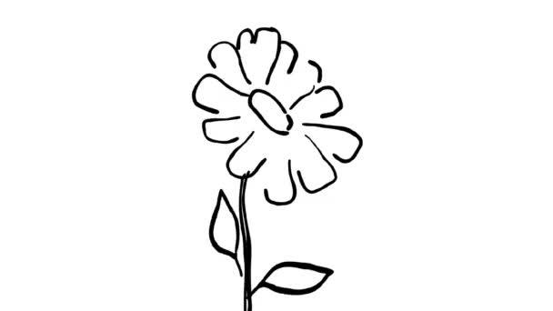 2D animáció mozgó grafikus rajz egy százszorszép virág növény fúj imbolygott a szél, fehér és zöld képernyő alfa Matt HD nagy felbontású.