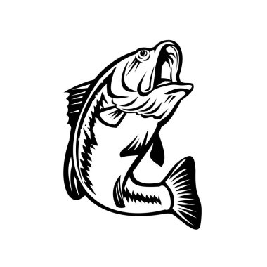 Illustration of a bucketmouth bass or largemouth, species of black bass and a carnivorous freshwater gamefish, swimming down on isolated background done in retro black and white style.