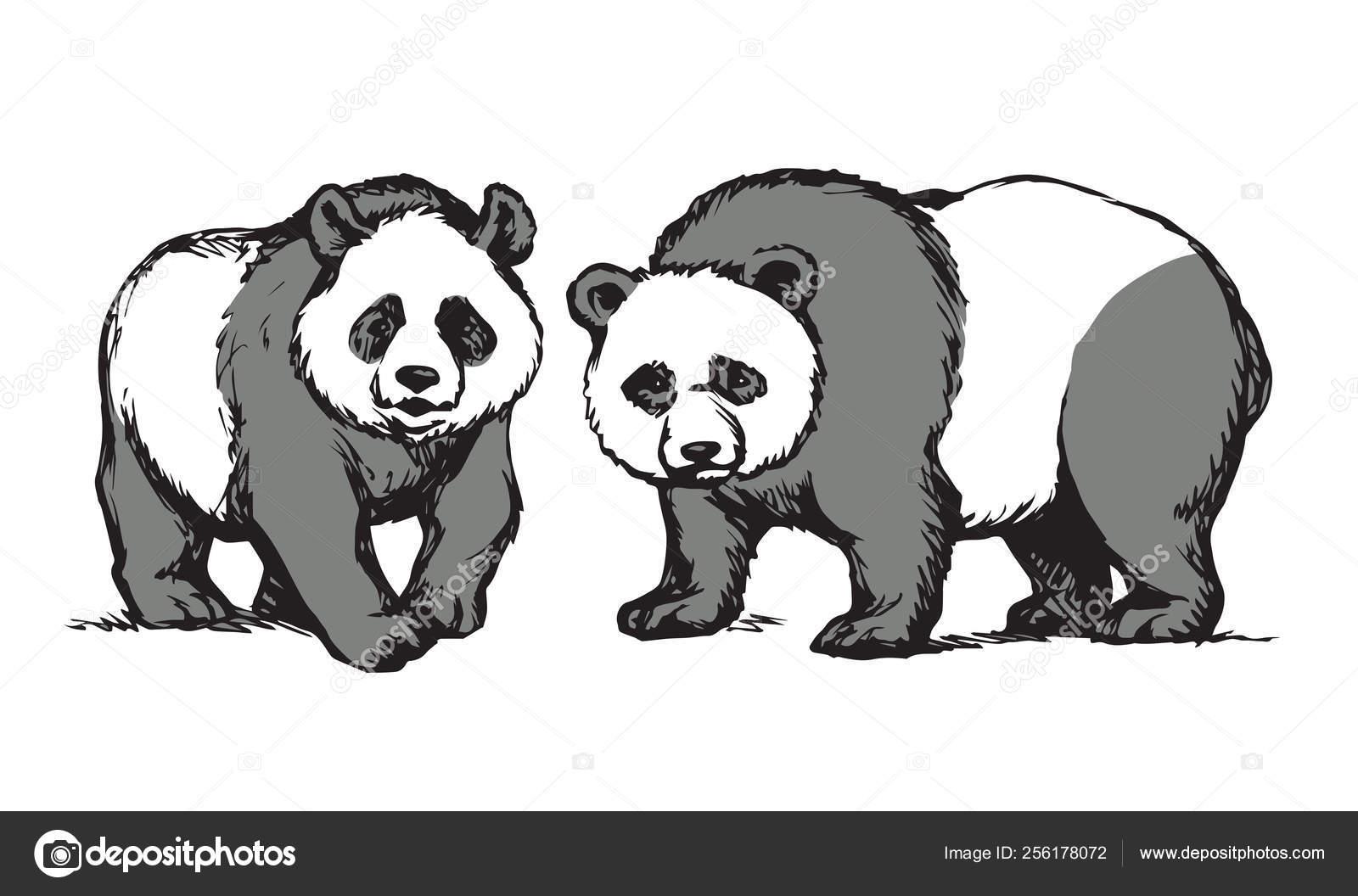 Panda Dessin Vectoriel Image Vectorielle Marinka 256178072
