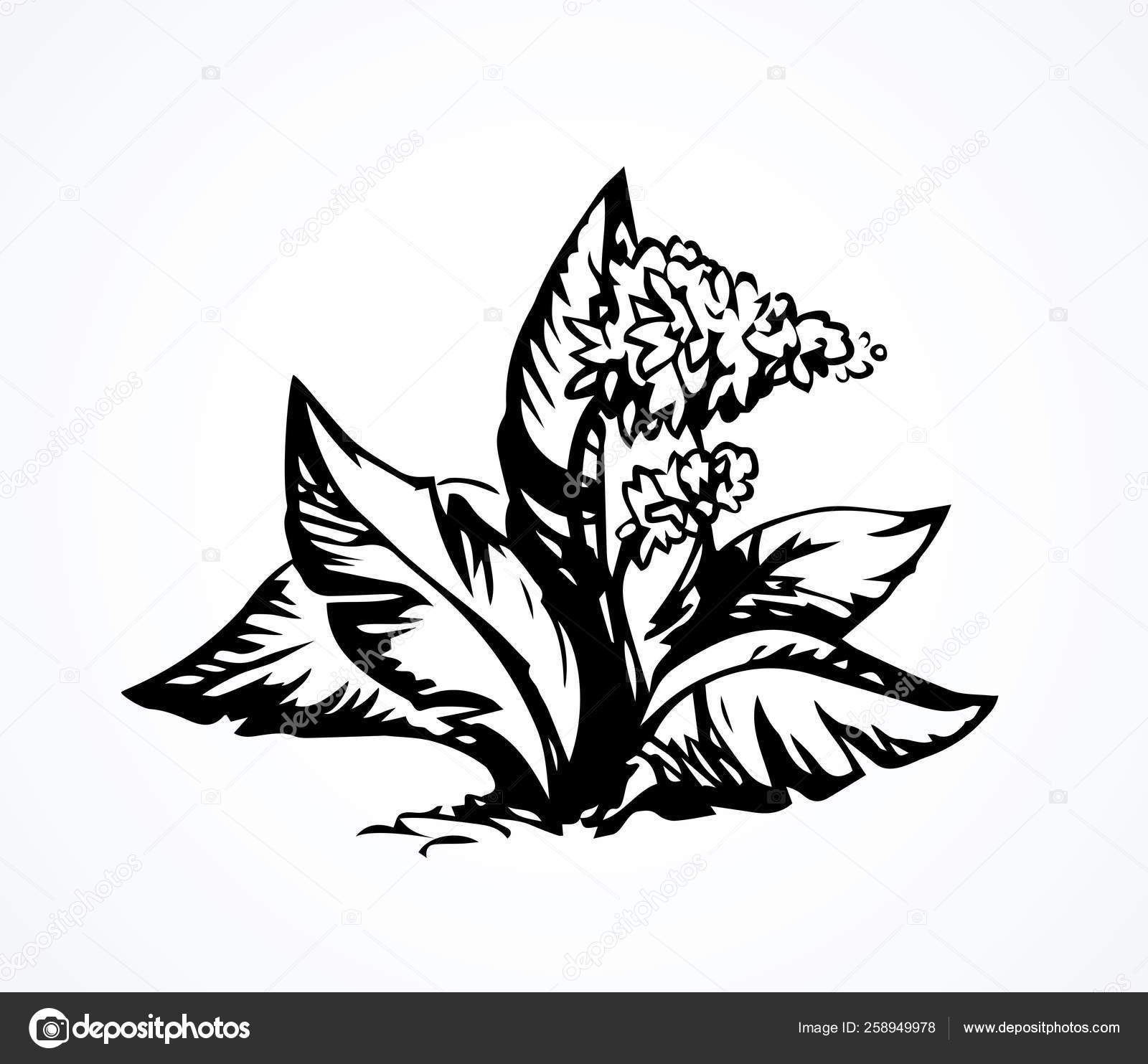 Fleur Tropicale Buisson Dessin Vectoriel Image