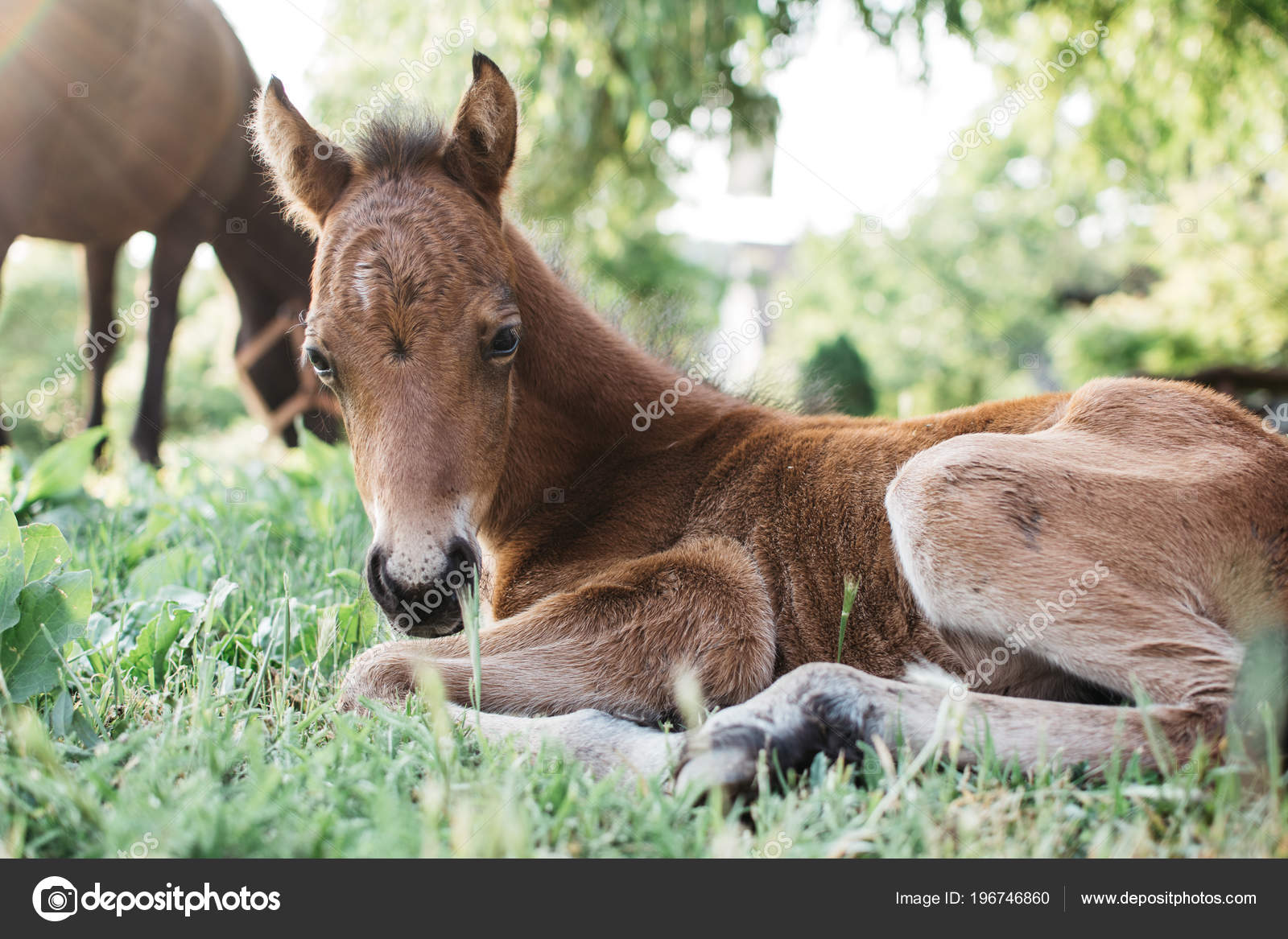 Horse And Baby Horse Foal Young Horse Baby Horse Stock Photo C Loriklaszlo 196746860