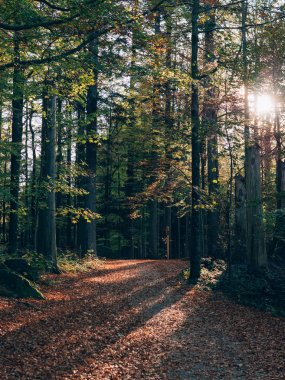 Forest path. Beautiful autumn forest landscape.