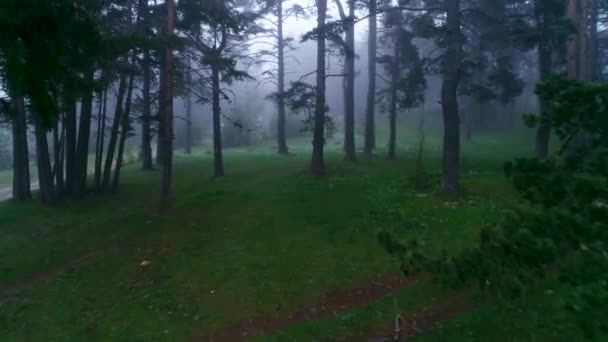 Forest landscape and morning fog in spring