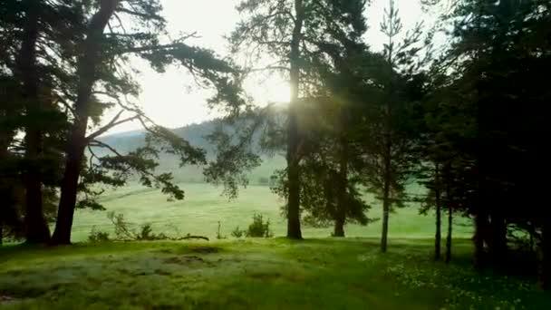 Lesní krajina a ranní mlha na jaře