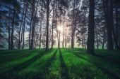 Lesní krajina a ranní mlha na jaře.