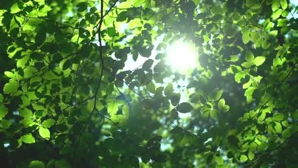 Lesní stromy a zelené listy zářící ve slunečním světle video