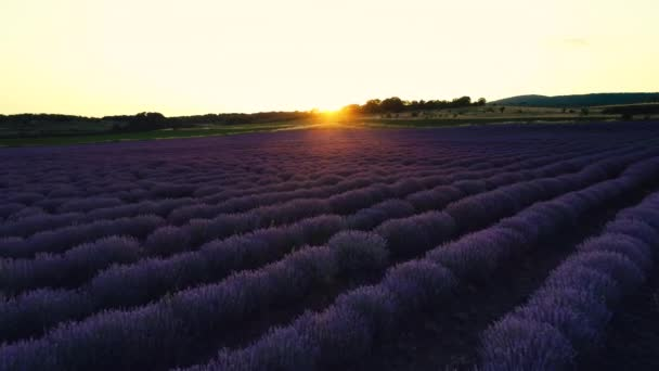 Lavender field in Provence and beautiful sunset over the farmland