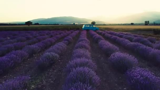 Lavender field at sunset. Old van between the rows.