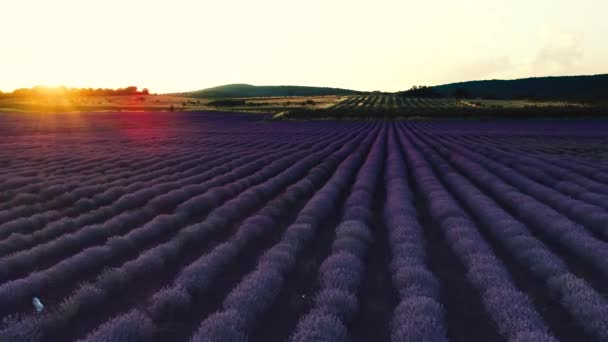 Levandulová pole v Provence a krásný západ slunce nad u zemědělské půdy