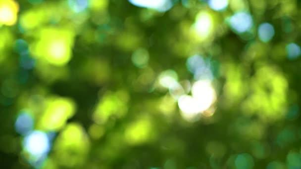 Erdei fa és a zöld levelek ragyogó napsütésben, szüret lencse videóinak