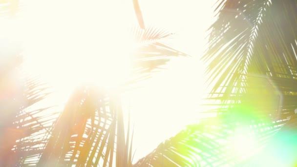 Absztrakt napfény sugarai között pálmafa levél és a meleg trópusi eső
