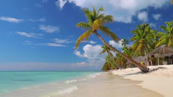 Tropical caribbean island Saona, Dominican Republic. Beautiful beach, palm trees and clear sea water