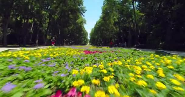 Varna Bulgaria, aerial view of sea garden park with colorful flowers and running man