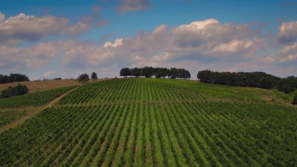 Západ slunce nad vinice v údolí, Evropa. Letecký pohled. Video.