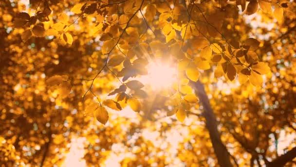 Levelek ősszel fák színes homályos háttér. Elesni a parkban..