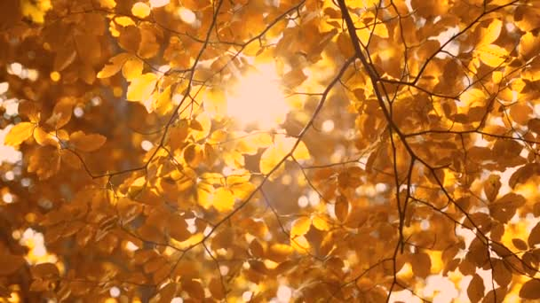 Autumn Trees and Leaves and shining sun rays