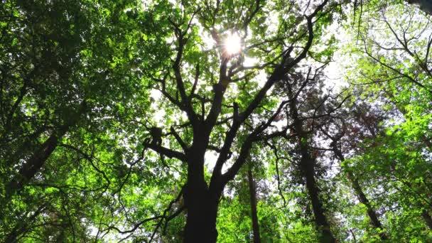 Reggel az erdőben. Zöld fák levelei és ragyogó nap.