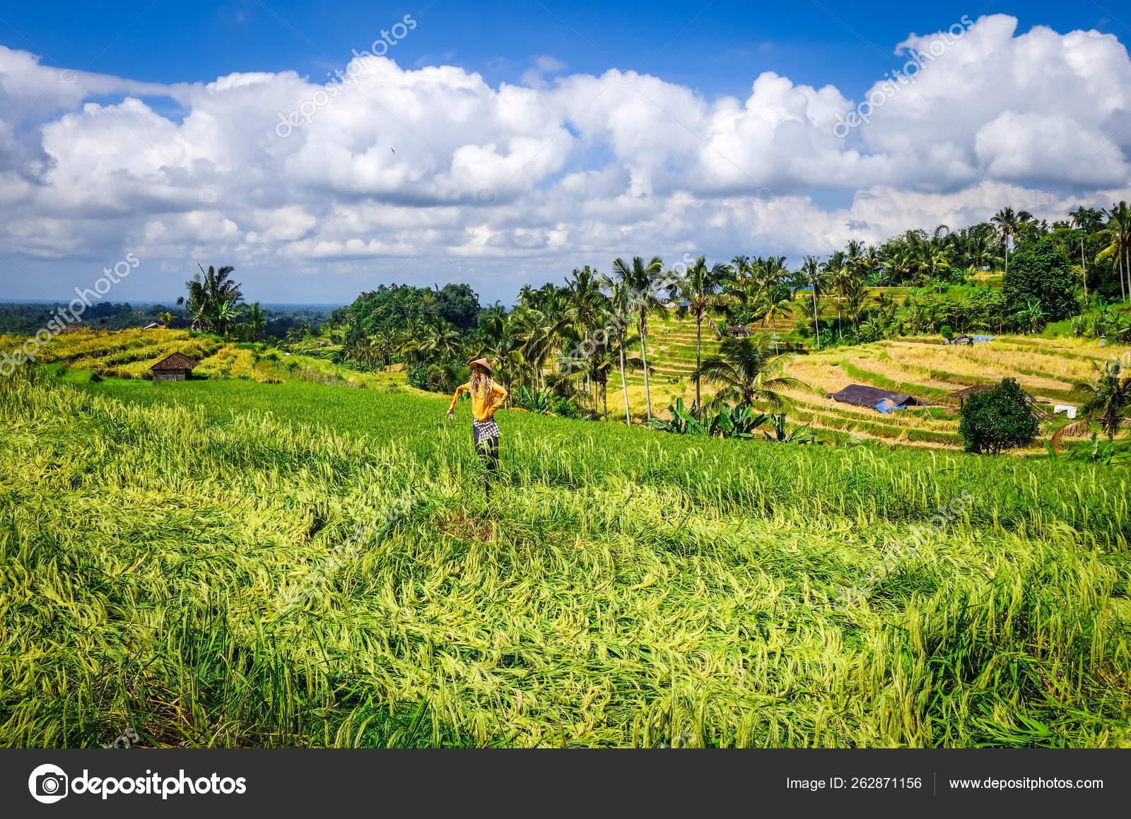 Spaventapasseri In Jatiluwih Risaie Terrazze Di Riso Bali