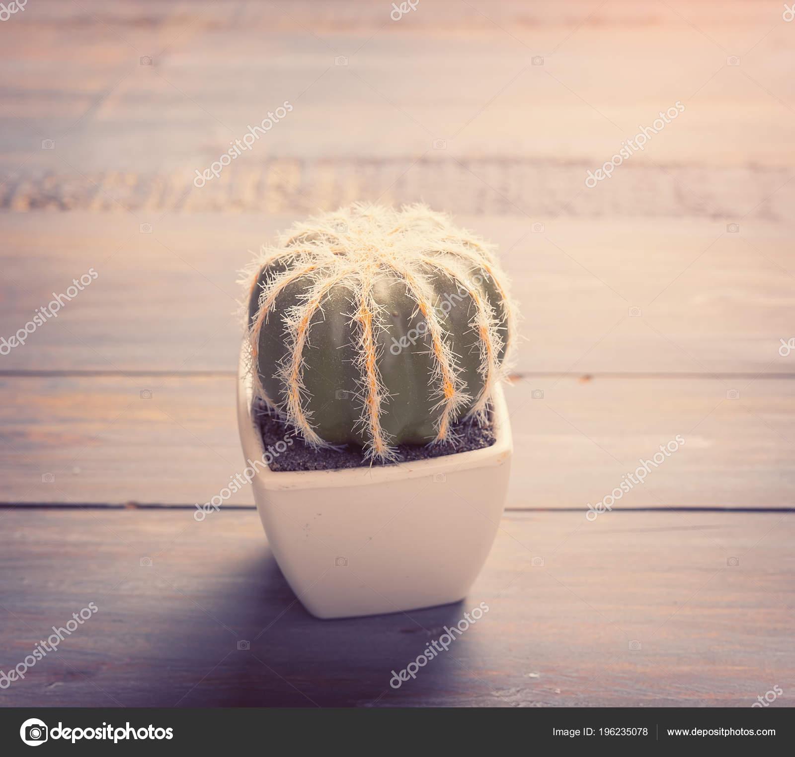 Cactus Pot Wood Table — Stock Photo © firefox #196235078