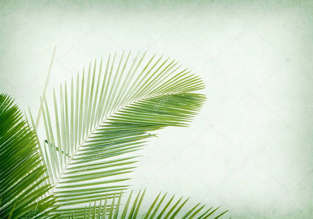 old paper background with palm leaf