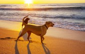 Fotografie dogs on beach in Hawaii island