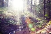 Fotografia Foresta di estate in fase di alba. Ispirando la priorità bassa di estate