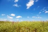 Fotografie letní louka přírodní krajina