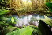 Wunderschönes Bachwasser, das in den Regenwald fließt. Costa Rica, Mittelamerika