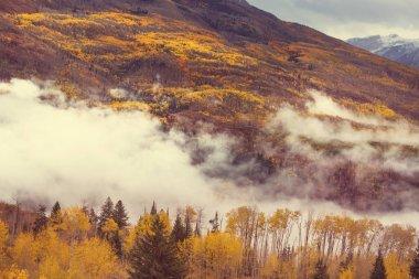 Colorful yellow autumn in Colorado, United States. Fall season. stock vector