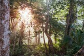 Bella verde giungla tropicale