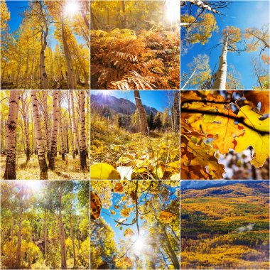 Orange and Yellow Autumn collage. Fall background. stock vector
