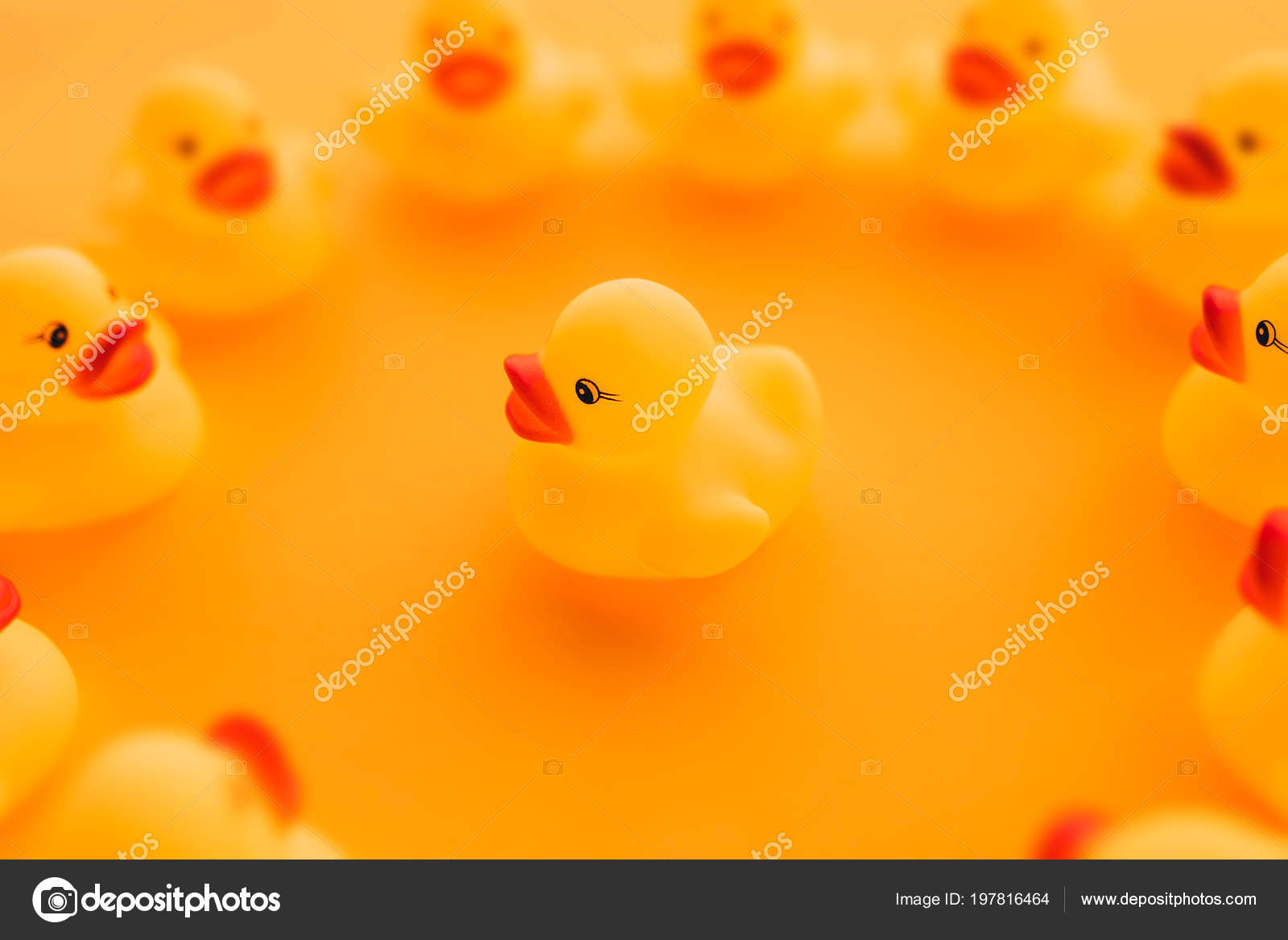 Rubber Ducks Leadership Concept Small Yellow Duckling Leader Talking ...