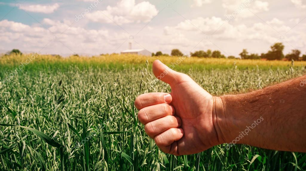 Satisfied farmer agronomist gesturing thumbs up after analyzing oats growth in field during the control examination of cereal plant development