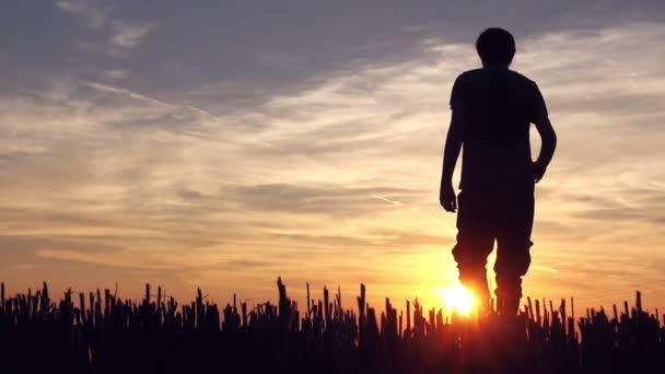 Farmer walking in wheat stubble field in sunset