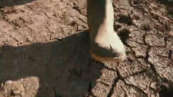 Landwirt in Gummistiefeln gehen auf trockenem Boden Boden, ist globale Erwärmung und den Klimawandel Änderung Kulturen und Ertrag auswirken.