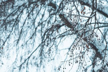 Treetop branches in winter snow, idyllic wintertime season scenery detail