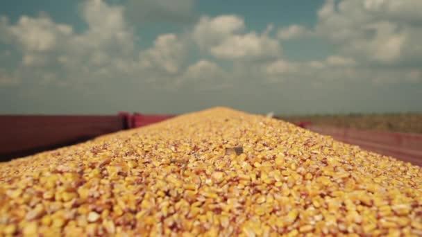 Zemědělský přívěs plný čerstvě sklizené kukuřice jader po úspěšné sklizni