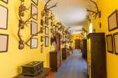 The hall of trophies, deer antlers, Europe. European museum, famous places for travel and tourism