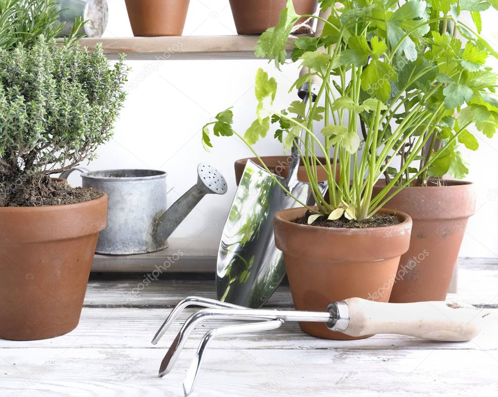 aromatic plants potted and gardening equipment